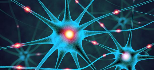 Neurociencia Aprendizado Linguas